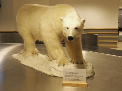 Svalbard Longyearbyen