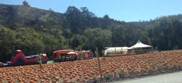 Half Moon Bay Pumpkin Season