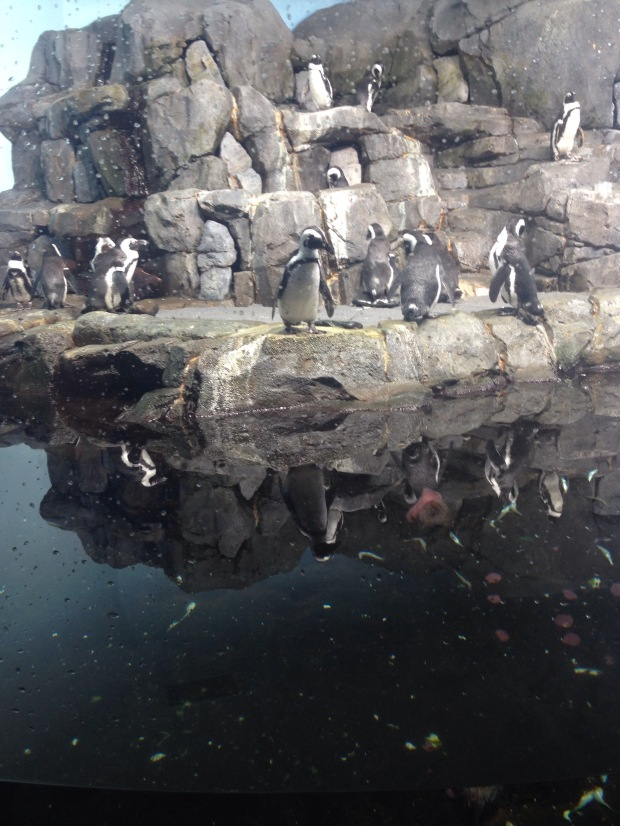 Monterey Bay Aquarium, Pinguin
