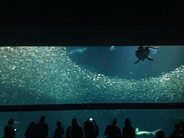 Seeschildkröte, Riesenschildkröte, Aquarium