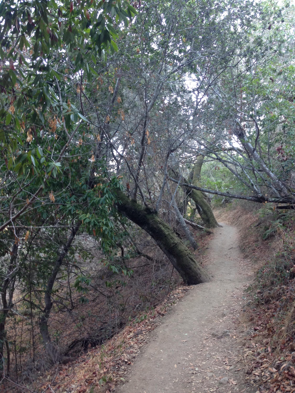 Edgewood, Kalifornien, California, CA, USA, hiking, Hiking Trail, Hike, wandern, Wochenende, Ausflug
