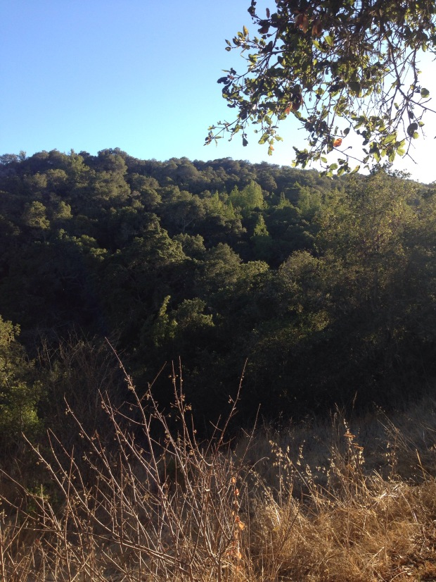 Hiking, Edgewood, Hike, Trail, Wandern,