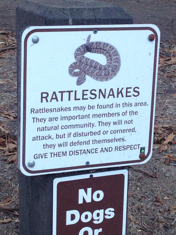 Klapperschlangen, Kalifornien, Edgewood, Edgewood Park, California, CA, USA, Rattlesnakes