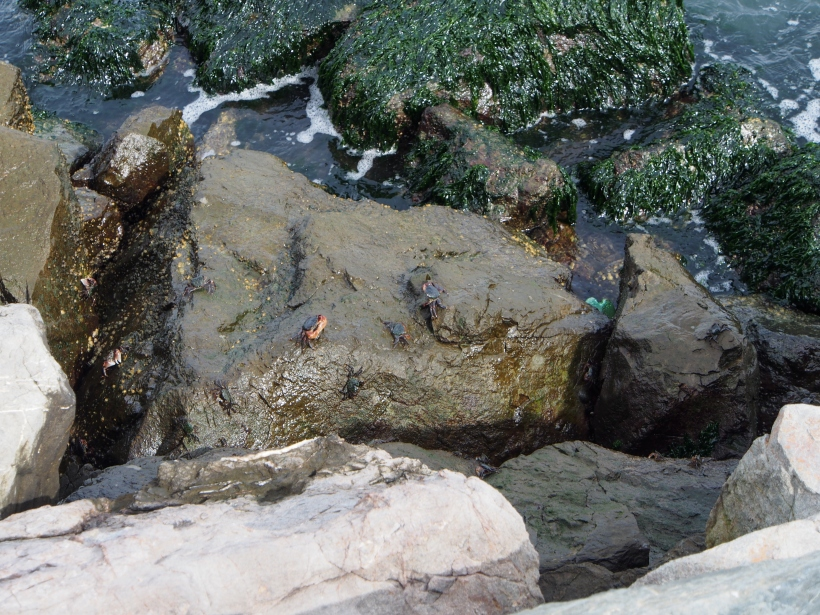 Sausalito Crabs