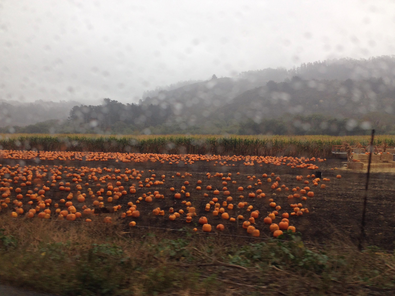 Pumpkin Season, Kürbis, Kürbis-Saison, Kürbis-Farm