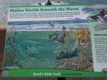 Meeresbewohner, Meertiere, Kalifornien, USA