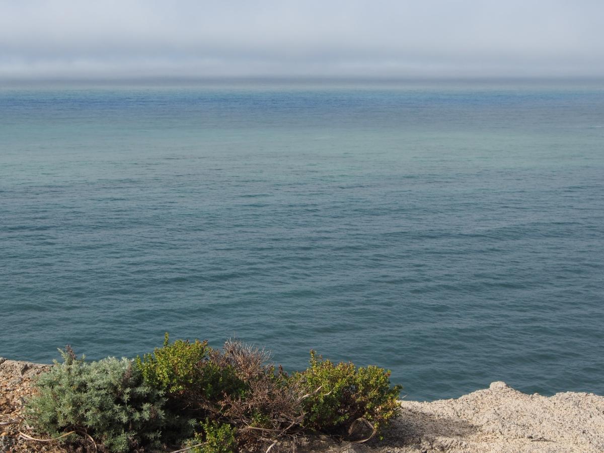 Wale, Wanderung, Aussichtspunkt, Beobachten, Kalifornien, USA