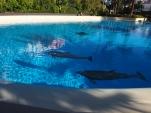 Attraktion, Touristenattraktion, Siegfried and Roy Secret Garden Las Vegas Dolphin Resort