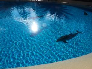 Attraktion, Touristenattraktion, Delfinshow, Las Vegas, trainierte Delfine