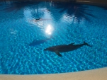 Attraktion, Touristenattraktion, Sehenswürdigkeit, Delfin, Resort, Gehege,
