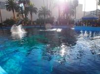 Attraktion, Touristenattraktion, Wasser, Sprung, Delfin