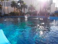 Attraktion, Touristenattraktion, Sehenswürdigkeit, springender Delfin, Dolphin Resort, The Mirage