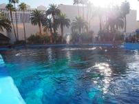 Attraktion, Touristenattraktion, Sehenswürdigkeit, Delfinsprung, Delfinanlage, Las Vegas, Delfinshow, Delfin Dressur, Delphine