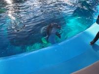Attraktion, Touristenattraktion, Sehenswürdigkeit, Delfin, Delphin, Delphine, Delfinshow, trainierter Delfine