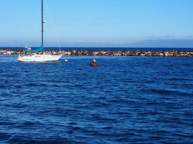 Hafen Monterey Bay