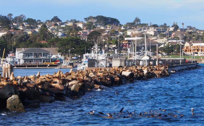 Whale Watching, Monterey Bay, Kalifornien, California, Seehunde, Seelöwen