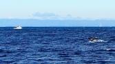 Schwanzflosse, Grauwal, Whale Watching, Monterey