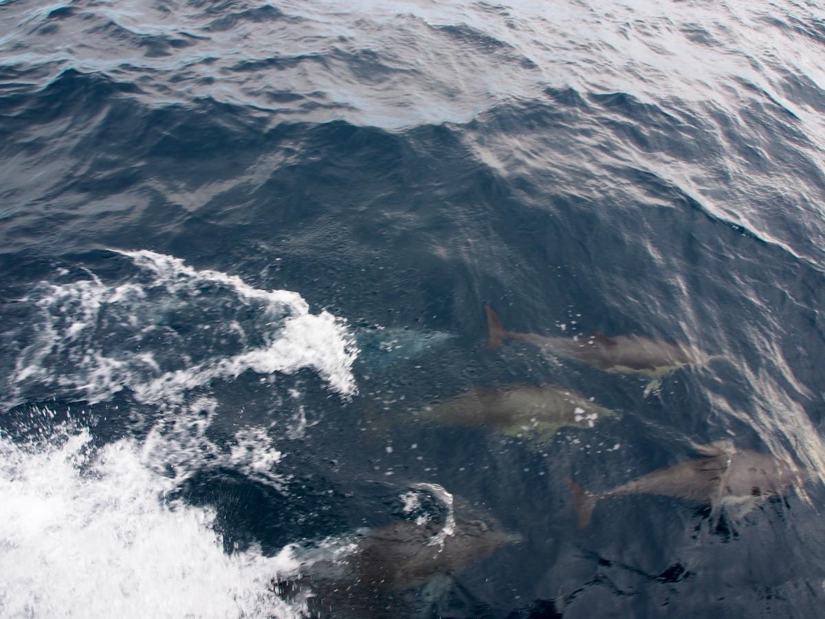 Delfin-Rudel, Delfin-Kindergarten, Delphin Kindergarten, Delphin Rudel