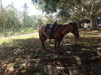 Valle de Viñales, Kuba, Pferde, Mieten, Fortbewegung