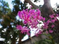 Orchideen, Wildwachsend, pink, Blüte