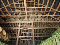 Zigarren, Herstellung, Kuba, Tabak, Deckblätter, Blättertrocknung, Viñales
