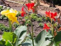 Blumen, öko, bio, Kuba