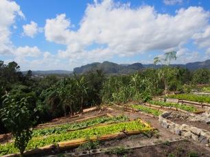 bio, ökologisch, kuba, landwirtschaft, bauern, felder, ertrag, vinales