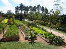 Landwirtschaft, Bauern, Felder, Kuba, Vinales, ökologisch, Bio,