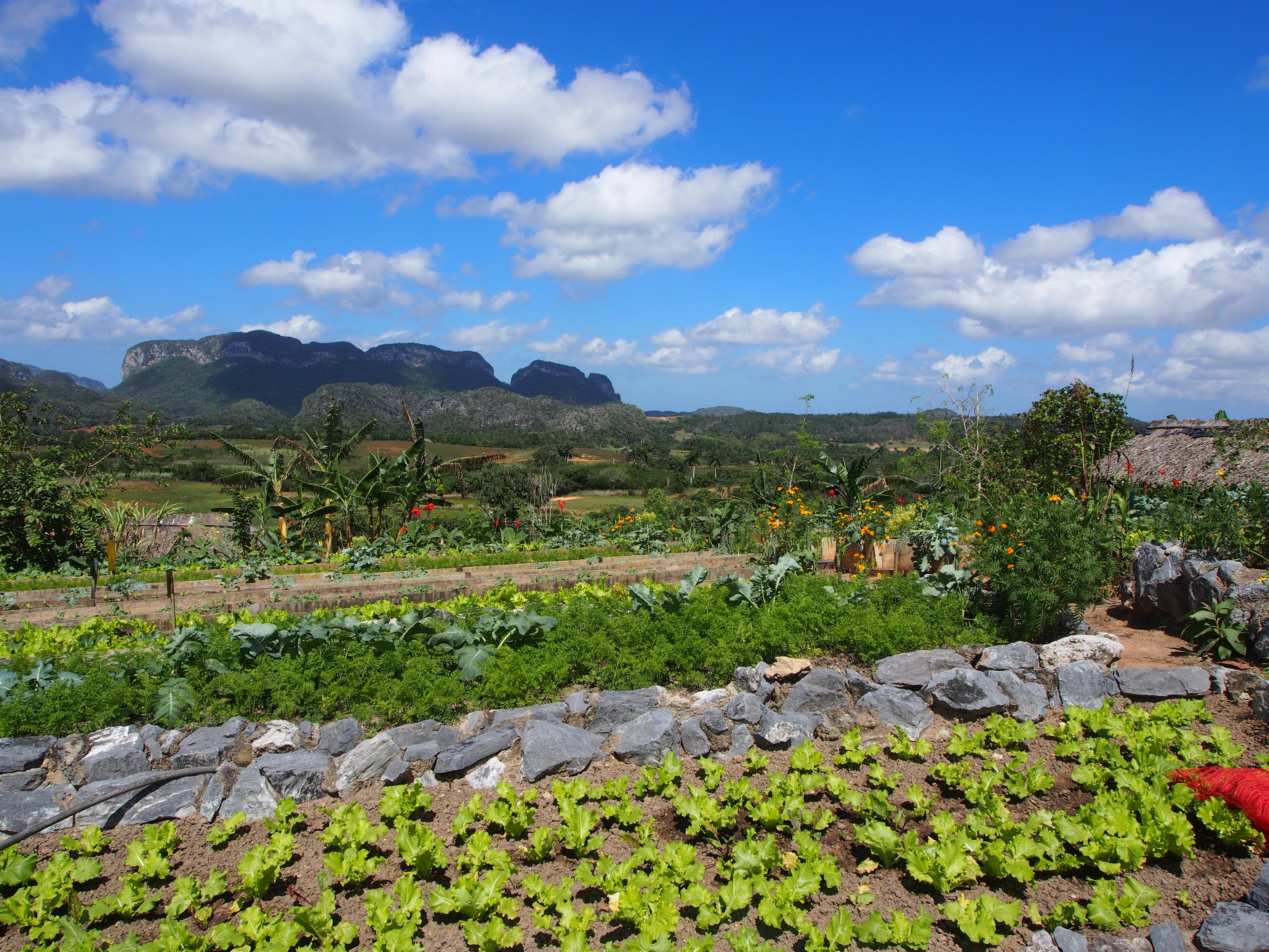 Kuba Landwirtschaft