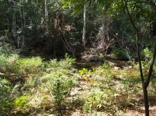 Kuba, Wald, Wanderung