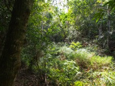 Kuba, Dschungel, Wald, Wanderung