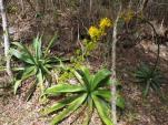 Kubas Flora