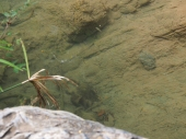 Fische, klares, Wasser, sauber, Wasserqualität, Kuba, Baden, Salto de Javira