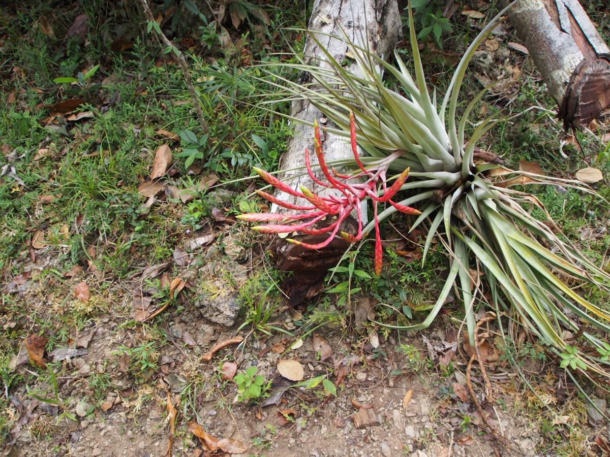 Pflanzen, Flora, Fauna, Kuba, Wanderung, Wald