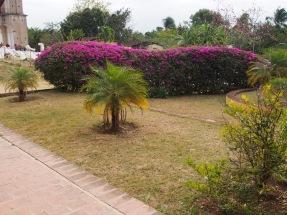 Kuba, Natur, Blumen, Landschaft