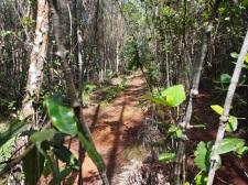 Flora, Alexander, von Humboldt, Nationalpark, Kuba, Wanderung, Trekking