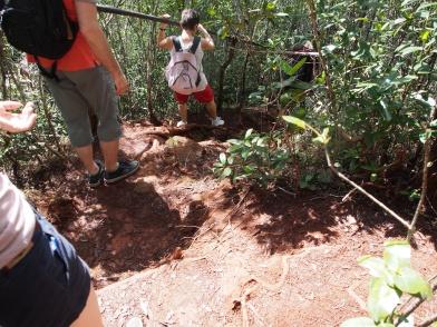Wanderung, steil, trekking, heiß, berg, humboldt, nationalpark, kuba