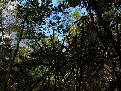 Dschungel, Humboldt, Nationalpark, Kuba, Flora, Pflanzenwelt, Trekking, Wanderung