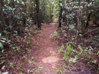 Trekkingpfad, Nationalpark, Kuba, Humboldt