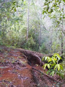 Trekking, Wanderung, Dschungel, naturbelassen, Humboldt, Nationalpark, Kuba, Baracoa,