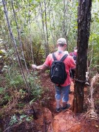 Wanderung, wandern, trekking, humboldt, nationalpark, dschungel, kuba