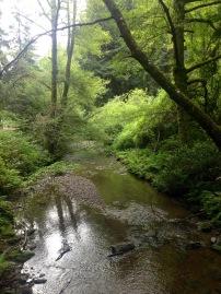 Muir Woods National Monument, Muir, John, Woods, Wälder, Mammutbäume, Riesenbäume, Kalifornien