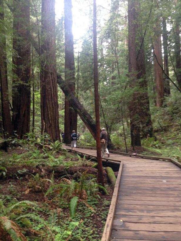 Wanderung, Wanderweg, San Francisco, Ausflugsziel, Attraktion, Sehenswürdigkeit, Sehenswert, Wald, Mammutbäume, Riesenbäume, Nordkalifornien, Natur