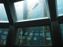 Seeotter, Aquarium, Seattle, Wochenendtrip, Schlechtwetter, Besichtigung, Sightseeing, Ausflugsziel, Ausflug, was machen, unternehmen, besuchen