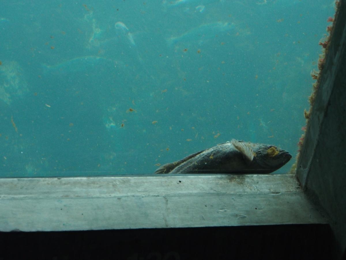 Fische, Aquarium, Seattle, Wochenendtrip, Schlechtwetter, Besichtigung, Sightseeing, Ausflugsziel, Ausflug, was machen, unternehmen, besuchen