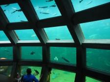 Observatorium, beobachten, Aquarium, Seattle, Wochenendtrip, Schlechtwetter, Besichtigung, Sightseeing, Ausflugsziel, Ausflug, was machen, unternehmen, besuchen