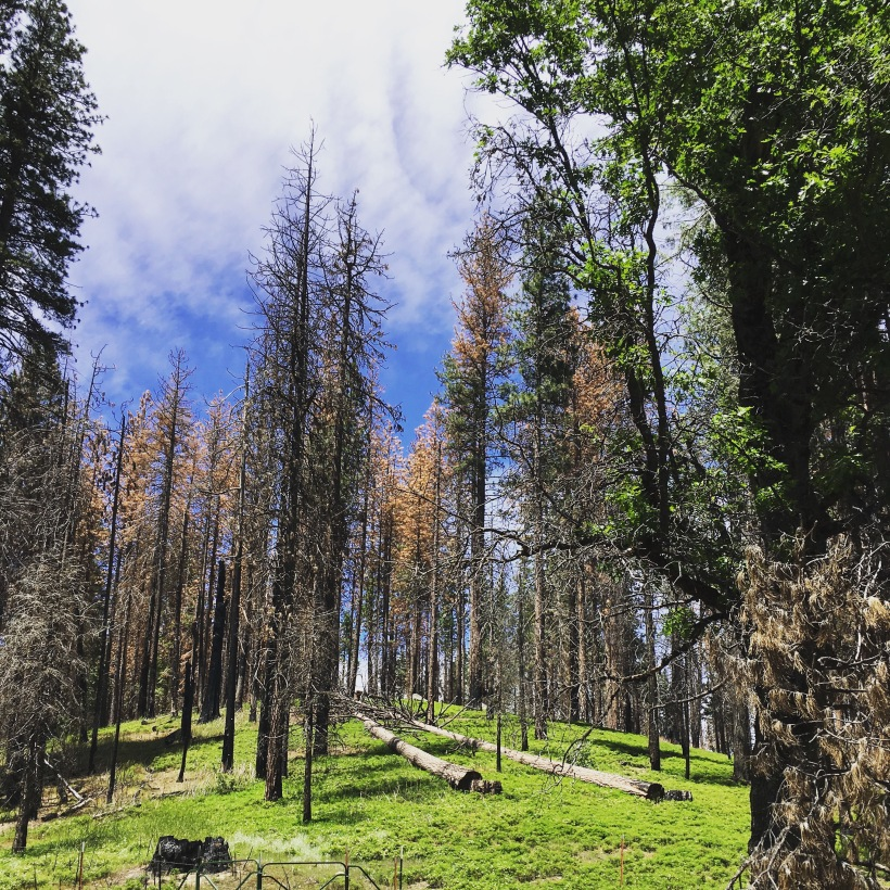 Sequioa, Mammutbäume, Yosemite, Nationalpark, USA, Kalifornien, Ausflugsziel, Ausflug, Wochenende, Wochenendtrip, Trip, Wandern, Natur,