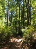 Big Basin, Skyline to the Sea Trial, Kalifornien, State Park, Nationalpark, California, Amerika, Ausflug, Ausflugsziel, Wanderung, Wochenendtrip, Wochenendausflug, Wandertrip, Tipps, Wanderung, Sehenswürdigkeit, Ausflugstipp, Wald, Natur, Riesenbäume, Mammutbäume, Sequia, Redwoods, Natur, Landschaft, Wanderung, Wanderweg, Trail, Hike