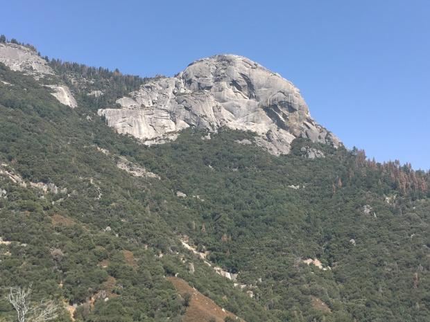 Wald, Riesenbaum, Riesenbäume, Mammutbäume, Riesenmammutbäume, Sequoia, Redwood, Sequoia Nationalpark, Sequoia und Kings Canyon Nationalpark, Nationalpark, USA, Amerika, Kalifornien, Wälder, Wandern, Wanderung, Touristenattraktion, Sehenswürdigkeit, Ausflug, Ausflugsziel, Wochenendtrip, Moro Rock, Bergsteigen, klettern