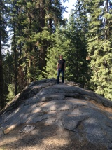 Kings Canyon, King Canyon, Wald, Riesenbaum, Riesenbäume, Mammutbäume, Riesenmammutbäume, Sequoia, Redwood, Sequoia Nationalpark, Sequoia und Kings Canyon Nationalpark, Nationalpark, USA, Amerika, Kalifornien, Wälder, Wandern, Wanderung, Touristenattraktion, Sehenswürdigkeit, Ausflug, Ausflugsziel, Wochenendtrip, Moro Rock, Bergsteigen, klettern, Sierra Nevada